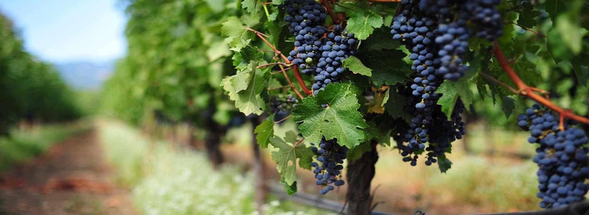 best italian wine from trentino